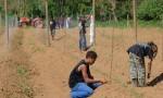 Plantation des ignames bio