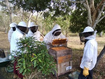 Perfectionnement apicole pour les CAP